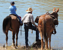 The Horse Owners Guide to Water Quality Protection