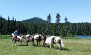 Back Country Horsemen of Washington Partners on Pacific Crest Trail Reconstruction