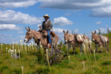Back Country Horsemen: America's Best Kept Secret in Wilderness Stewardship