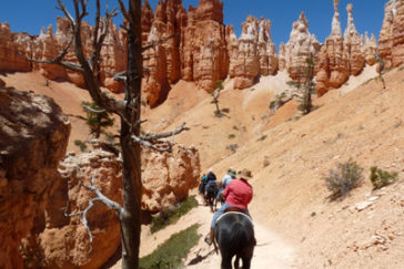 Proposed Rule Change for Private Horse Use –Bryce Canyon National Park