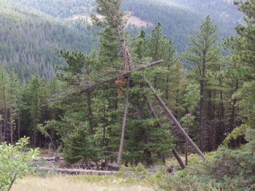 Hung-up Tree Awareness